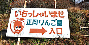 Masaoka Tourist Apple Orchard