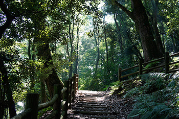 Kashima forest (Mountain trail)